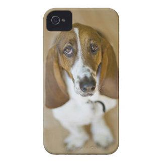 米国、イリノイ、ワシントン州のバセット2のポートレート Case-Mate iPhone 4 ケース