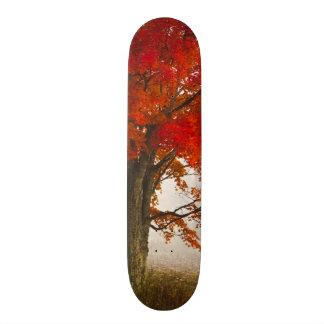 米国、ウェストヴァージニア、デービス。 秋のアメリカハナノキ スケートボード