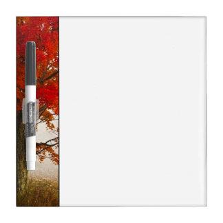 米国、ウェストヴァージニア、デービス。 秋のアメリカハナノキ ホワイトボード