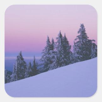 米国、オレゴンのDeschutesの国有林、薄暗がり スクエアシール