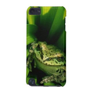 米国、オレゴン、偽ヘレボルスのTreefrog iPod Touch 5G ケース