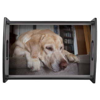 米国、オレゴン、Keizerのラブラドル・レトリーバー犬の休息 トレー