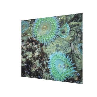 米国、オレゴン、Nepture SP。 宝石ある調子を与えられた海 キャンバスプリント