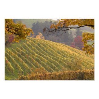 米国、オレゴン、Newberg。 落下のブドウ園 フォトプリント