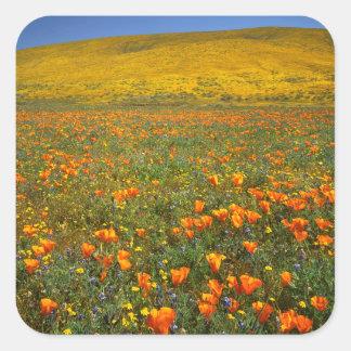 米国、カリフォルニアのカモシカの谷カリフォルニア スクエアシール