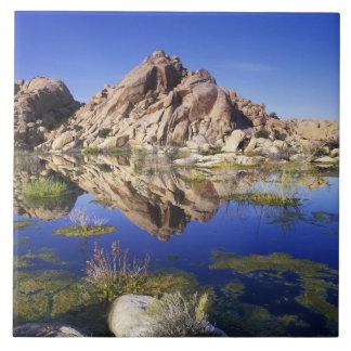 米国、カリフォルニアのジョシュアツリーの国立公園、 タイル