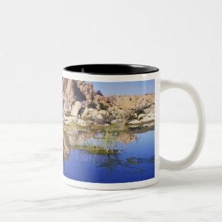 米国、カリフォルニアのジョシュアツリーの国立公園、 ツートーンマグカップ