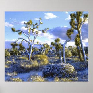 米国、カリフォルニアのジョシュアツリーの国立公園 ポスター