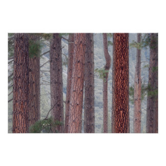 米国、カリフォルニアのヨセミテ国立公園 ポスター