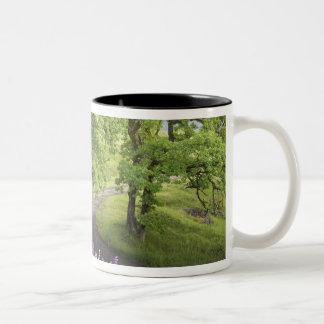 米国、カリフォルニアのレッドウッドの国立公園。 土 ツートーンマグカップ