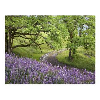 米国、カリフォルニアのレッドウッドの国立公園。 土 ポストカード