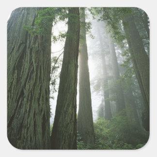 米国、カリフォルニアのレッドウッドの国立公園、2 スクエアシール