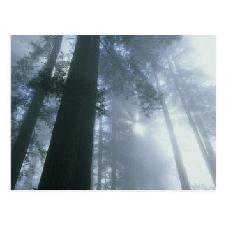 米国、カリフォルニアのレッドウッドの国立公園、Del ポストカード