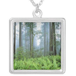 米国、カリフォルニアのレッドウッドNP。 レッドウッドの木 シルバープレートネックレス