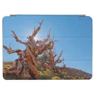 米国、カリフォルニアのInyoの国有林10 iPad Air カバー