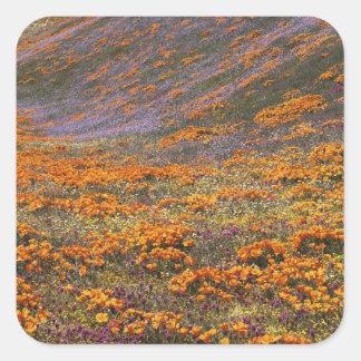 米国、カリフォルニアのTehachapi山、2 スクエアシール