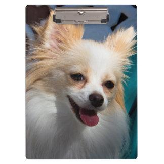 米国、カリフォルニア。 ポメラニア犬のポートレート クリップボード