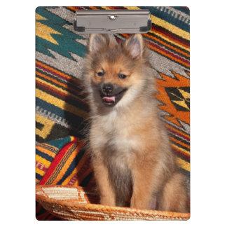 米国、カリフォルニア。 ポメラニア犬のモデル クリップボード