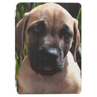米国、カリフォルニア。 マスティフの子犬のポートレート2 iPad AIR カバー