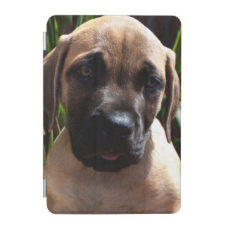 米国、カリフォルニア。 マスティフの子犬のポートレート2 iPad MINIカバー