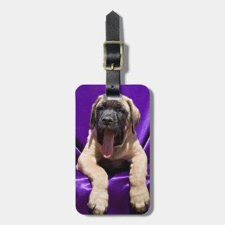 米国、カリフォルニア。 紫色のマスティフの子犬 ラゲッジタグ