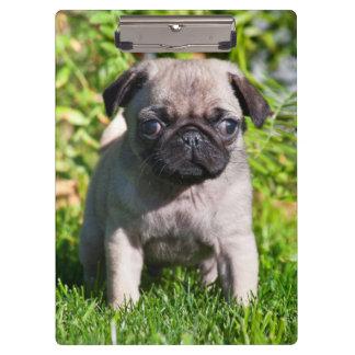 米国、カリフォルニア。 草に立っているパグの子犬 クリップボード