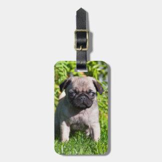 米国、カリフォルニア。 草に立っているパグの子犬 ラゲッジタグ