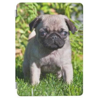 米国、カリフォルニア。 草に立っているパグの子犬 iPad AIR カバー