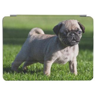 米国、カリフォルニア。 草2に立っているパグの子犬 iPad AIR カバー
