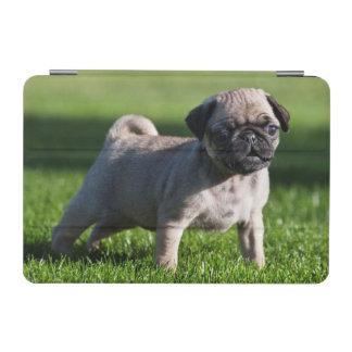 米国、カリフォルニア。 草2に立っているパグの子犬 iPad MINIカバー