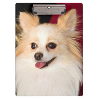 米国、カリフォルニア。 赤のポメラニア犬のポートレート クリップボード