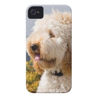 米国、カリフォルニア。 Labradoodle 3のポートレート Case-Mate iPhone 4 ケース