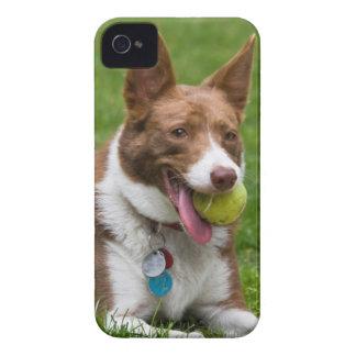 米国、カリフォルニア。 Mcnabの羊飼いの待っていること Case-Mate iPhone 4 ケース