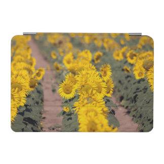 米国、カンザス。 ヒマワリ(Helianthus Annuus) iPad Miniカバー