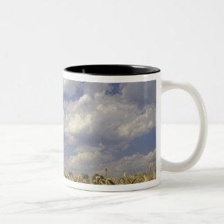 米国、ケンタッキー、ルーイスビル。 ムギの穀物 ツートーンマグカップ