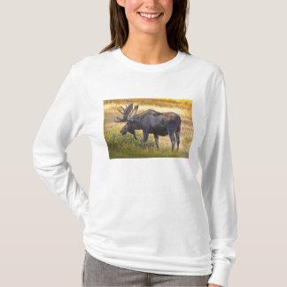 米国、コロラド州のカメロンのパス。 Bullのアメリカヘラジカとの Tシャツ