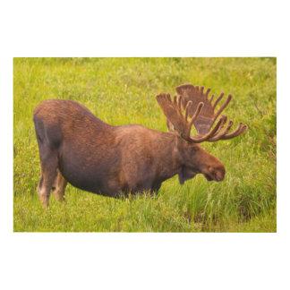 米国、コロラド州のカメロンのパス。 Bullのアメリカヘラジカ ウッドウォールアート