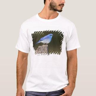 米国、コロラド州のロッキー山脈の国民 Tシャツ