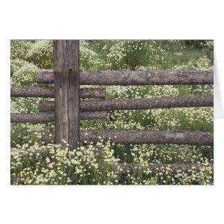 米国、コロラド州の丸太の塀のまわりの野生Chamomile カード