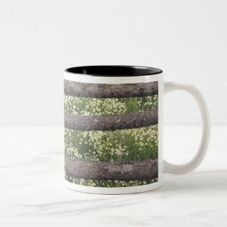 米国、コロラド州の丸太の塀のまわりの野生Chamomile ツートーンマグカップ