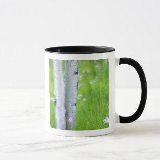米国、コロラド州の湖都市、《植物》アスペン マグカップ