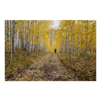 米国、コロラド州の近のGunnisonの国有林 ポスター