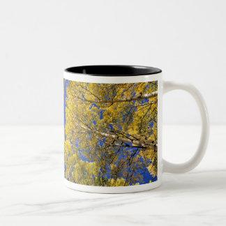 米国、コロラド州の《植物》アスペン区域。 秋の《植物》アスペンの森林 ツートーンマグカップ