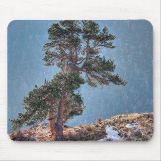 米国、コロラド州のEstes公園の木 マウスパッド