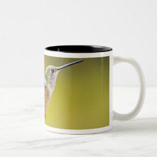 米国、コロラド州、サミット郡、Heeney。 側面図 ツートーンマグカップ