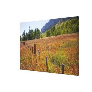 米国、コロラド州、サンファンの国有林、 キャンバスプリント