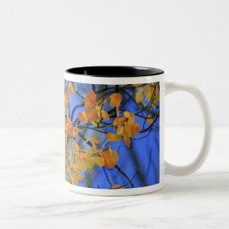 米国、コロラド州。 取った《植物》アスペンの葉 ツートーンマグカップ