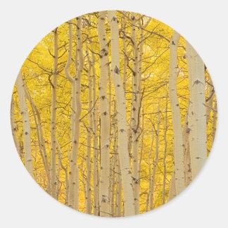 米国、コロラド州。 Gunnisonの国民の《植物》アスペン ラウンドシール