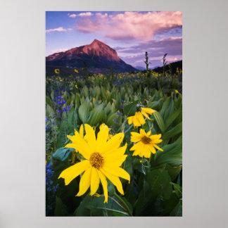 米国、コロラド州、Mt.はビュートの頂点に達しました ポスター