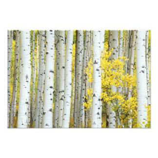 米国、コロラド州、White川の国有林、 フォトプリント
